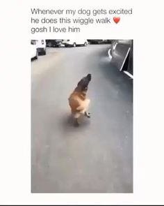 This is hilarious! 😂 Source by dog dog memes dog videos videos wallpaper dog memes dog quotes dogs dogs pictures dogs videos puppies puppy video Funny Dog Memes, Funny Dog Videos, Funny Animal Memes, Cute Funny Animals, Funny Animal Pictures, Cute Baby Animals, Cute Dogs, Funny Dog Pics, Cat And Dog Memes