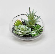 Succulents In Glass, Succulent Bowls, Succulent Planter Diy, Succulent Centerpieces, Succulent Gardening, Artificial Succulents, Succulent Arrangements, Planting Succulents, Succulent Plants