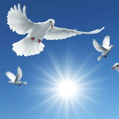 Messengers of peace, the beautiful dove Good Morning Gif Images, Holly Spirit, Dove Pictures, Lion And Lamb, Angel Warrior, Bible Illustrations, Peace Dove, Surrealism Painting, White Doves