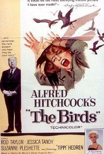 The Birds: A wealthy San Francisco socialite pursues a potential boyfriend to a small Northern California town that slowly takes a turn for the bizarre when birds of all kinds suddenly begin to attack people there in increasing numbers and with increasing viciousness.  (1963)