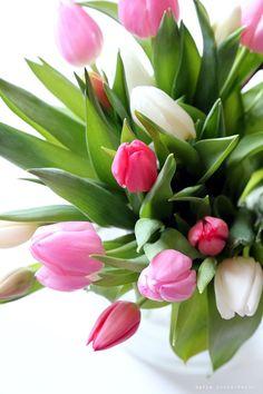 keväinen tulppaanimix - Vaaleanpunainen hirsitalo | Divaaniblogit