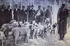 Foto de la jauria del Duque de Arión, en la 2ª Exposición Internacional Canina celebrada en Madrid en Mayo de 1913 Photo of the pack of hounds of the Duke of Arión, in 2 ª International Canine Exhibition celebrated in Madrid in May, 1913