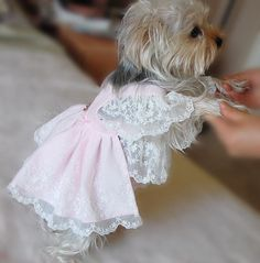 Beautiful soft Pink lace dress for small dog, cute wedding dress for dog. $98.00, via Etsy.