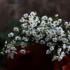Veronica, Flower Art, Love Story, Dandelion, Art Photography, Bloom, Instagram Posts, Flowers, Plants