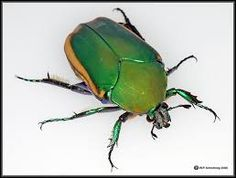 Image result for found a beetle
