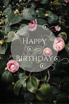 birthday images for women 52 sweet and funny Happy Birthday images for men, women, siblings, friends & family. Touching birthday images full of humor & beautiful loving wishes. Cool Happy Birthday Images, Happy Birthday Wishes Cards, Birthday Blessings, Happy Birthday Meme, Best Birthday Wishes, Happy Birthday For Her, Birthday Pins, Special Birthday, Birthday Greetings For Women