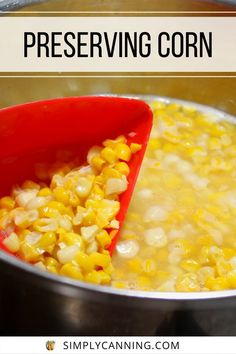 5 Ways of preserving corn. Canning Dehydrating, Pickling and Freezing (both on and off the cob). Bonus video on an easy way to strip the corn off the cob! If you've got a lot of corn to take care of you need this trick. #SimplyCanning #Preserving #Corn Canning Vegetables, Canning Tomatoes, All Vegetables, Corn Cob Jelly, Corn On Cob, Corn Relish Recipes, Jelly Recipes, Pickled Corn, Canning Corn