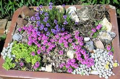 Miniature Garden: How to Plant Trough and Sink Gardens? could fit in my quirky garden Belfast Sink Garden Planter, Garden Sink, Rockery Garden, Bonsai Garden, Herbs Garden, Alpine Garden, Alpine Plants, Container Plants, Container Gardening
