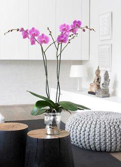 Bombay #Orchid #Inspiration #Flowers #Plants #Deco