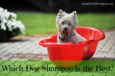Which Dog Shampoo is the Best? 5 dogs help me figure out which dog shampoo works the best for our pack.
