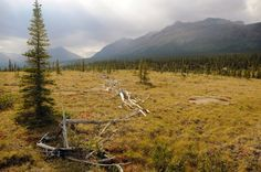 Archaeologists document Dene caribou fences in Northwest Territories, Canada. Researchers are documenting Sahtu Dene caribou fences in the Northwest Territories, marking a physical record of Indigenous history in the area...