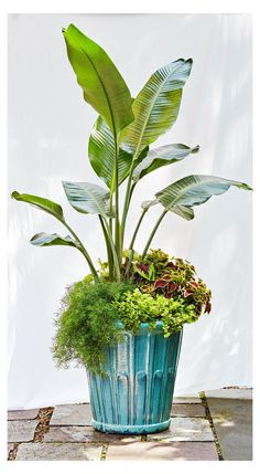 Tall Potted Plants, Patio Plants, Outdoor Planters, Large Plants, Indoor Plants, Container Herb Garden, Container Gardening Vegetables, Container Flowers, Container Plants