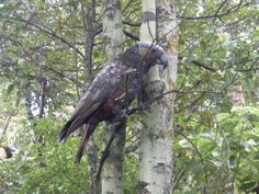 Unusual garden wildlife spotted on Stewart Island Walking In Nature, Conservation, Bald Eagle, New Zealand, National Parks, Wildlife, Creatures, Island, Explore