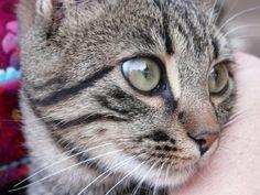 ... com/sites/healthypets/archive/2010/01/20/top-10-cat-behavior-tips.aspx #Cats #tips - Understanding Your Cat Behaviour better at Catsincare.com!
