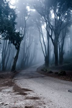 The Last Road by Jorge Maia, curve, trees, mysterious mist, misty, fog, peaceful, weathered, silence, photo