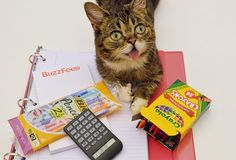 Shopping for school supplies is the most fun part of going to school. | Lil Bub's 17 Tips For Your First Day Back At School