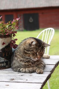 Livet på landet i två torp-Inredning, trädgård, mat & vin