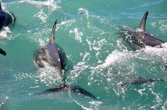 New Zealand~LOVIN THE DOLPHINS~!!!! <3