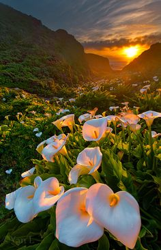 Behind The Shot: 'Calla Lily' by Yan Larsen – Big Sur, California
