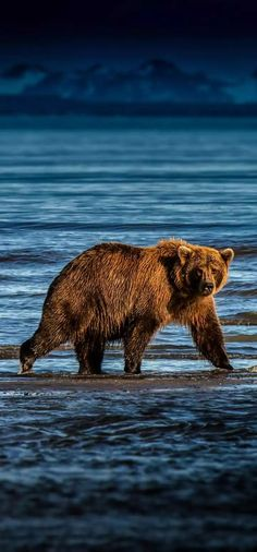 Hippie Wallpaper, Bear Wallpaper, Nature Animals, Animals And Pets, Lock Screen Picture, Animals Amazing, Bear Pictures, Reptiles And Amphibians, Bears