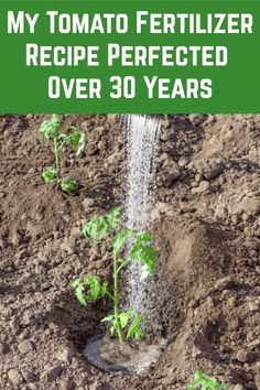I've been growing tomatoes for 30+ years now and this is my go-to recipe for fertilizing my tomatoes. This mix will give you high yielding, healthy tomato plants every year. Tips For Growing Tomatoes, Growing Tomato Plants, Growing Herbs, Growing Vegetables, Tomato Fertilizer, Fertilizer For Plants, Garden Fertilizers, Home Vegetable Garden, Tomato Garden