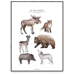 A poster of a watercolor painting for the children's room. On the poster you see a moose, a fox, a roe deer, a brown bear, a wild boar and a wolf. Roe Deer, Baby Mine, Wild Boar, Kids Room Art, Kids Prints, Art Pages, Brown Bear, Savannah, Watercolor Paintings