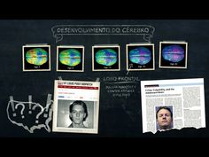 Desenvolvimento do Cérebro                          - OBSERVE O LOBO FRONTAL