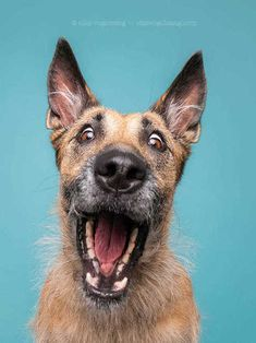 Expressive Dog Portraits by Elke Vogelsang Animals And Pets, Funny Animals, Cute Animals, I Love Dogs, Cute Dogs, Dog Expressions, Crazy Dog, Dog Portraits, Dog Photos