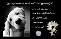 Kutyás idézetek – KutyaSzeretet.hu Dog Quotes, Beagle, Dog Love, Animals And Pets, Dogs, Pictures, Georgia, Marvel, Animal Pictures