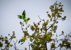 #parrots @eindhoven Eindhoven, Parrots, Photo S, Art Prints, Gallery, Plants, Art Impressions, Roof Rack, Parrot