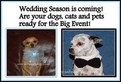 Posh Pooch Designs Dog Clothes: Wedding Dog Collars - Free Crochet Pattern - Posh Pooch Designs