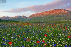 Flowery Valleys in the Village of Castelluccio, Italy
