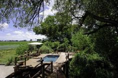 Tubu Tree's pool has an enviable view - Okavango Delta, Botswana Tree Camping, Okavango Delta, Wildlife Safari, Crystal Clear Water, Game Reserve, African Countries, Tour Operator, African Safari, Stunning View