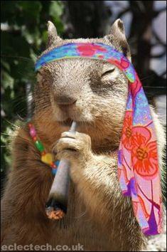 squirrel on drugs | Sugar Bush Squirrel - International Superstar - Supermodel & Military ...