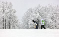 Italia, Friuli. Dolomiti: ciaspolate e non solo… vivere l'inverno con i bambini. http://www.familygo.eu/viaggiare_con_i_bambini/friuli-venezia-giulia/ciaspolate-dolomiti-friulane-con-i-bambini-003.html