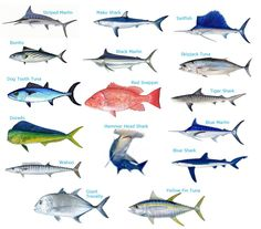 abrotea fish - Google Search