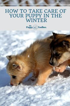 The winter months can be brutal for your puppy, so here are some winter puppy care tips for you to make sure your furbaby is protected! Months In A Year, Winter Months, Best Puppies, Puppy Care, Dog Coats, New Puppy, Pet Store, Take Care Of Yourself, Tool Box