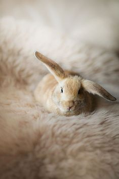 Good-Looking rabbit