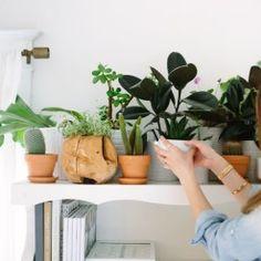 Een mooie verzameling planten op een kast
