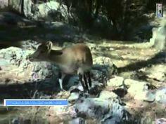 Dağ Keçisini Uçurdu.. | ibrahimfirat.net | KişiseL Görüş Evrensel Bilgi