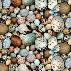Bird Egg Collection Bird Eggs Eggs Birds