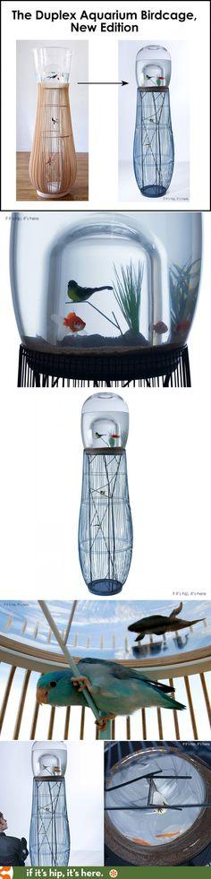 pflanzen aquarium akvaryum pinterest aquarium pflanzen und aquarium terrarium. Black Bedroom Furniture Sets. Home Design Ideas