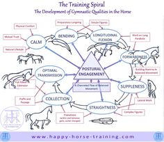 The Training Spiral illustrates how the true relevance of the progression of training is in the development of certain gymnastic qualities, which come about through work in postural engagement.