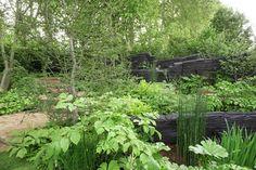 8 Chelsea Flower Show 2019 gardening trends to try at home Hardy Geranium, Pocket Park, Garden Show, Chelsea Flower Show, Delphinium, Outdoor Areas, Shade Garden, Geraniums, Water Features