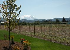 Mt. Hood from Mt. Hood Winery | Hood River, OR | Photo by Jeff Fisher