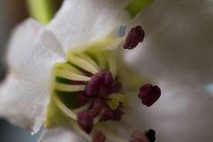 Just opened   #Upclose  #photoart  #vibrant  #wanderlust  #closeup   #spring  #perspective  #petals  #Exposure  #Outdoor #contrast  #Photography  #Nature  #bokeh  #ecology  #color  #Light  #composition  #But  #Photographer  #flora  #Bloom  #flower  #macro  #Stamen  #mothernature  #delicate  #Blossom  #beautiful  #splendid