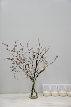 The Flower Whisperer   Markantonia
