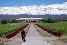 Argentina wine tours  Exhaustive Argentina Travel Advice For Everybody Wines from Argentina are popular through...