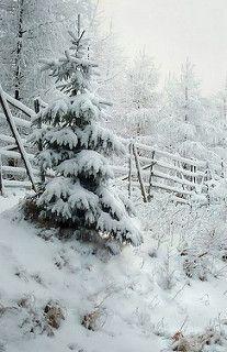 w oczekiwaniu na zimę | by roman25a