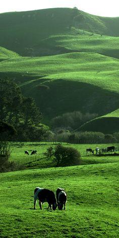 NZ, Hamilton, Waikato rural landscape